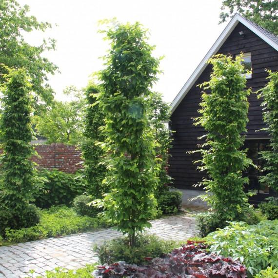 Eigentijds landelijk tuinontwerp