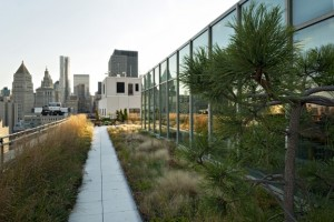 Kantoortuinen-bedrijfstuinen Tuinarchitect Eindhoven
