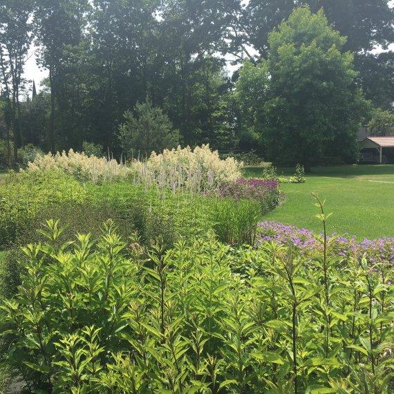Vaste plantenborders natuurlijke tuinen