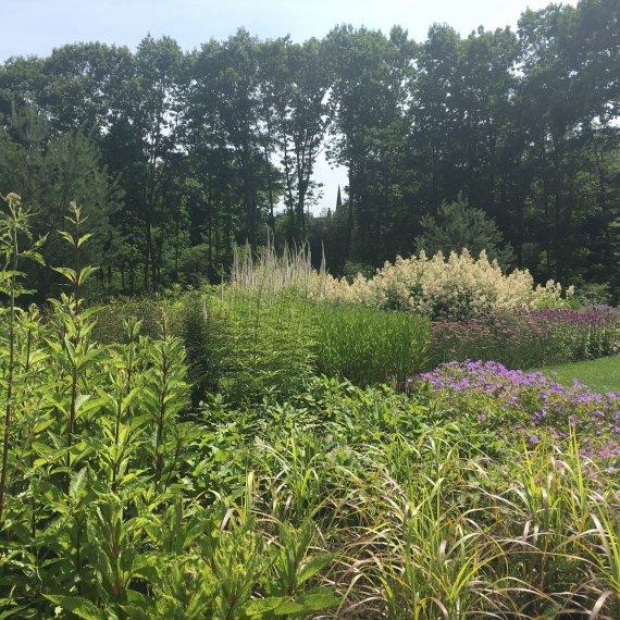 Kleurige vasteplantenborders