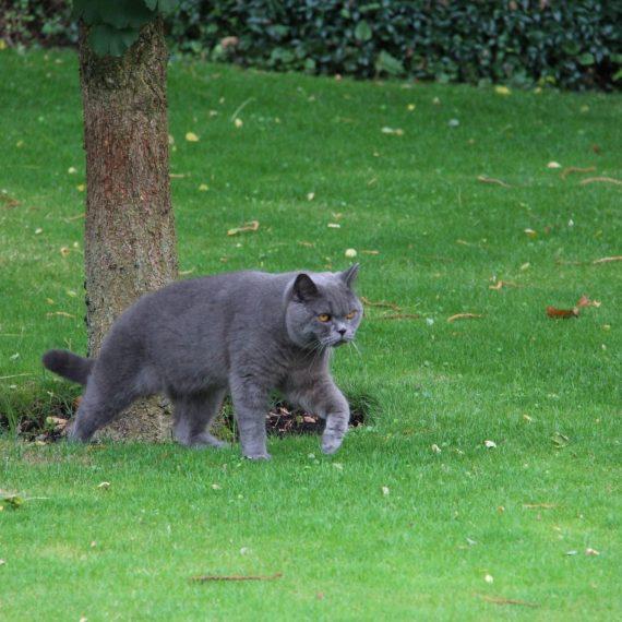 Een van de bewoners checkt de nieuwe tuin. Is er voldoende rekening gehouden met praktische looproutes?