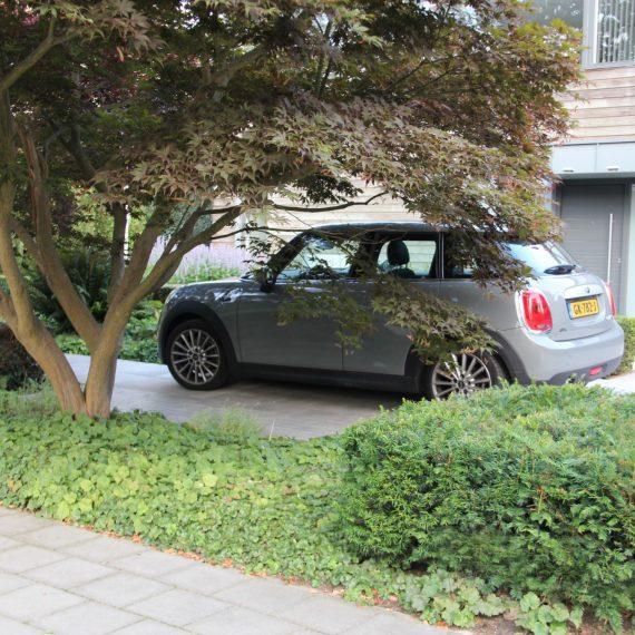 Een prachtige meerstammige esdoorn is de blikvanger van deze stijlvolle villatuin in Eindhoven