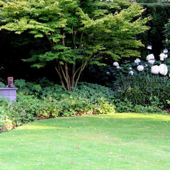 Behalve prachtige vaste plantencombinaties staan er schitterende esdoorns in deze tuin