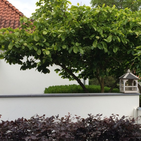 Tuinarchitect landelijke tuinen