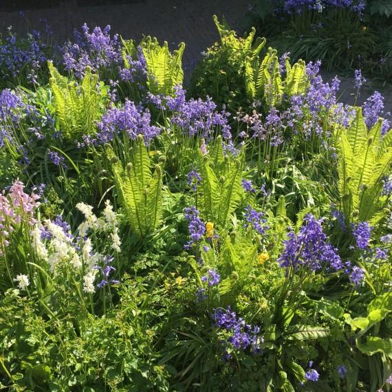 prachtige plantencombinatie in deze stadstuin in Leiden