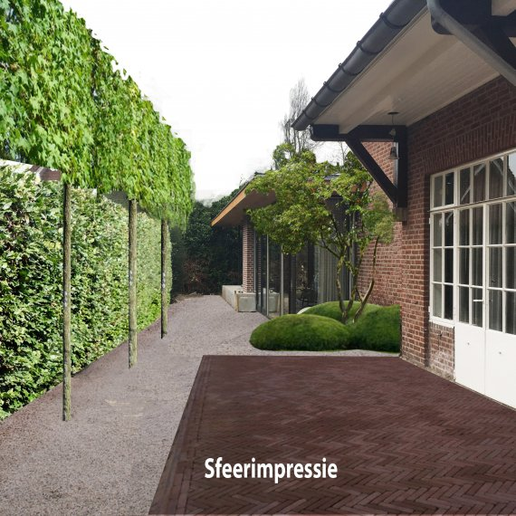 Sfeerimpressie Tuinontwerp Eindhoven